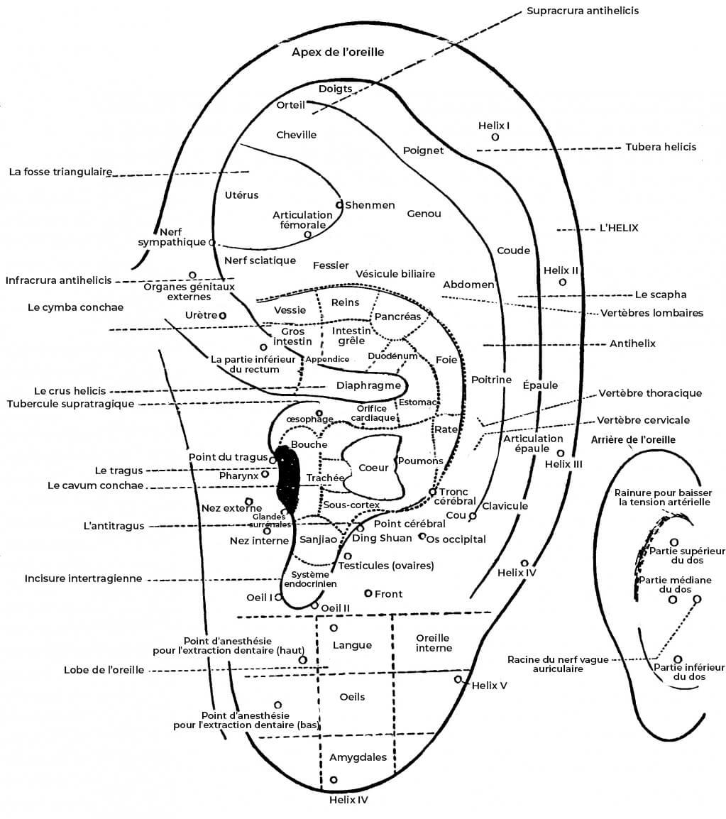 schéma points auriculothérapie